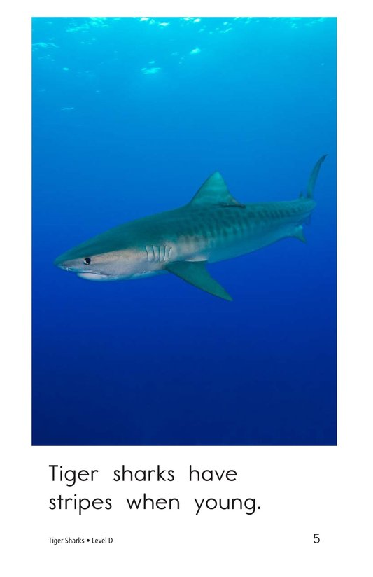 Book Preview For Tiger Sharks Page 5