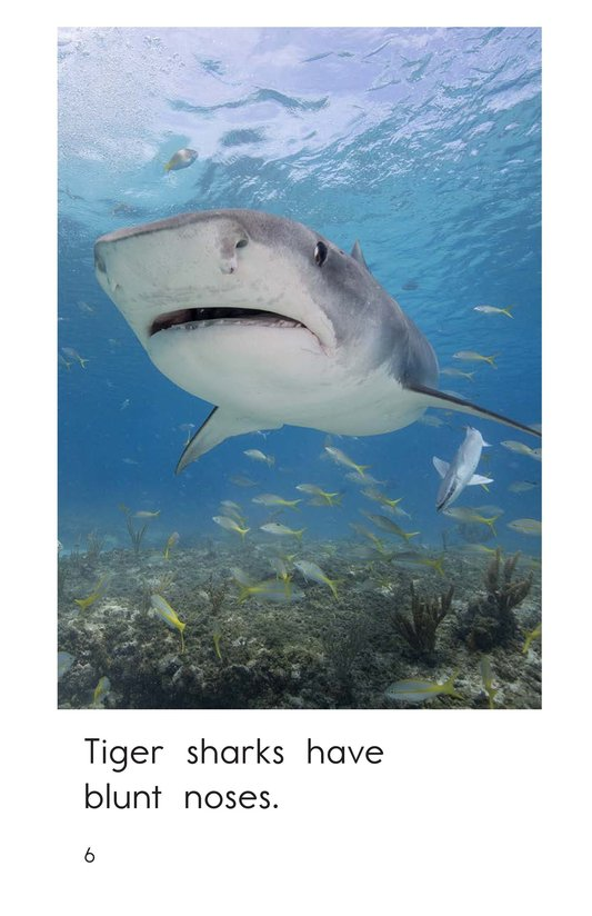 Book Preview For Tiger Sharks Page 6