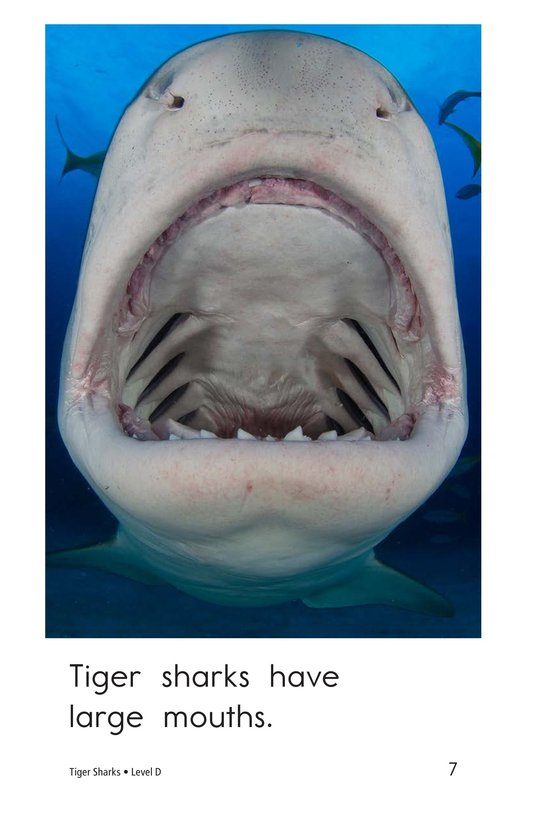 Book Preview For Tiger Sharks Page 7