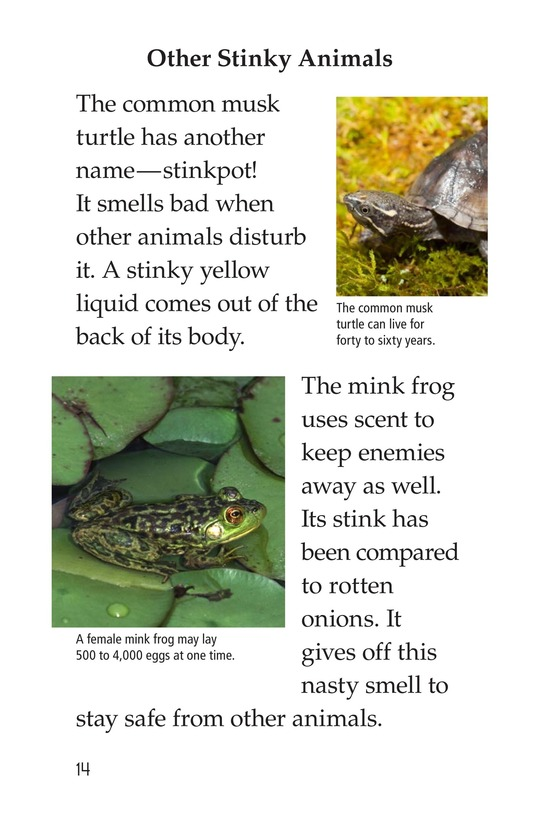 Book Preview For Nature Stinks! Page 14