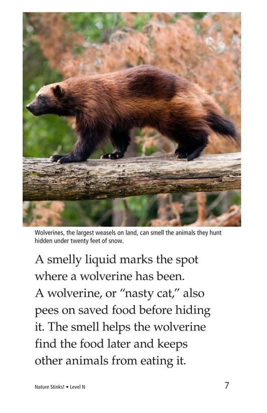 Book Preview For Nature Stinks! Page 7