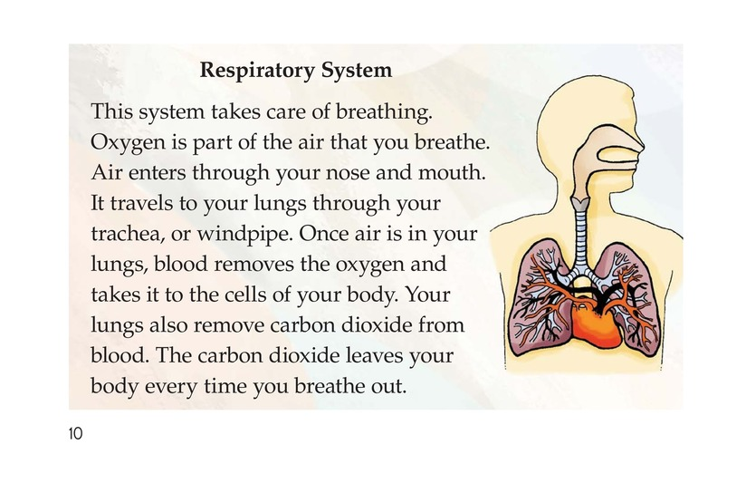 Book Preview For Inside Your Body Page 10
