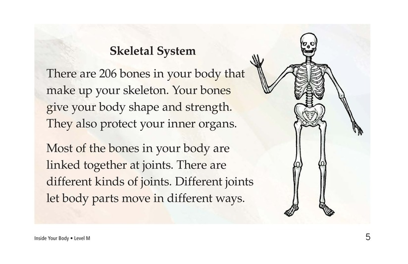 Book Preview For Inside Your Body Page 5
