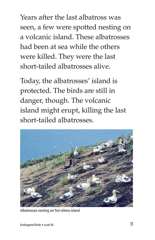 Book Preview For Endangered Birds Page 11