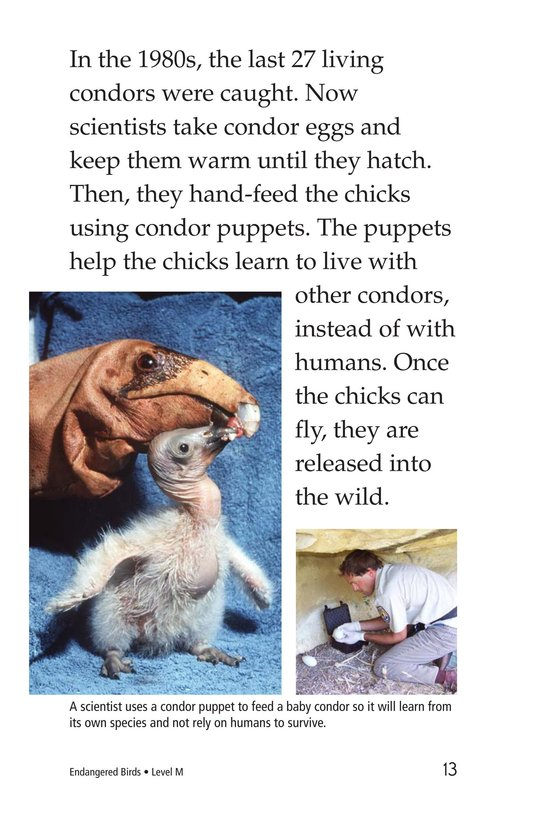 Book Preview For Endangered Birds Page 13