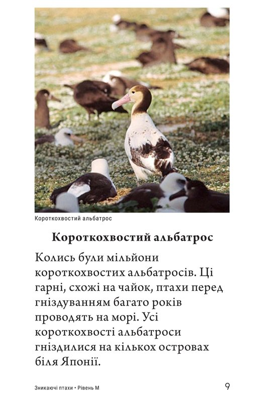 Book Preview For Endangered Birds Page 9