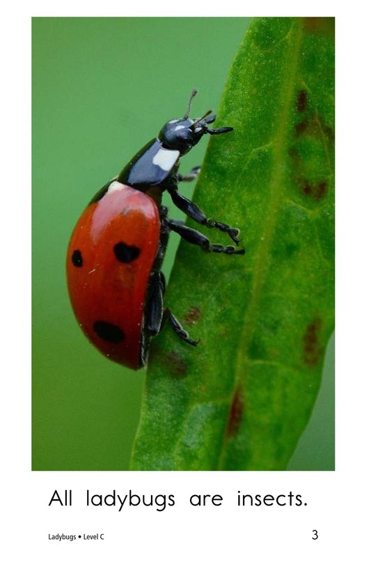 Book Preview For Ladybugs Page 3