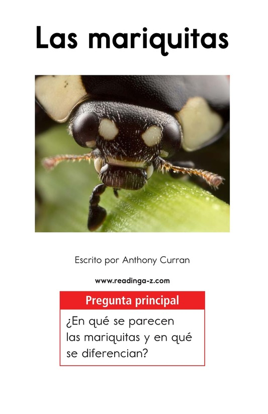 Book Preview For Ladybugs Page 1