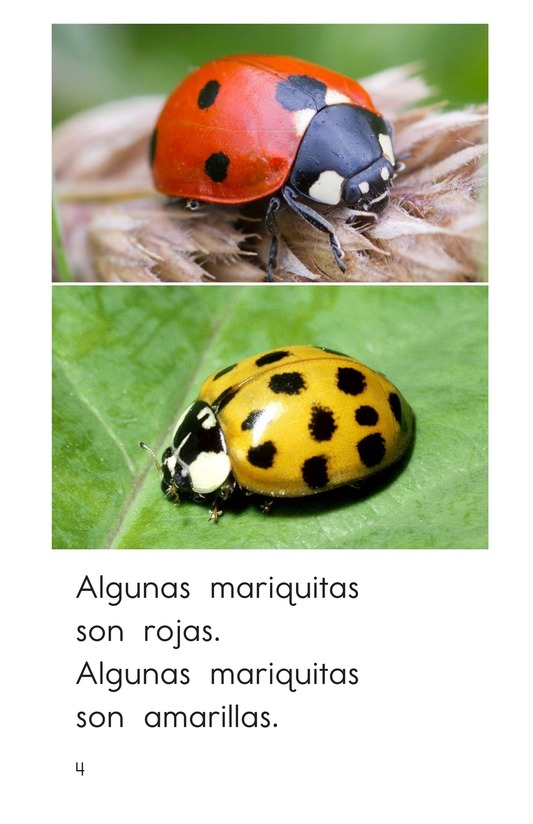 Book Preview For Ladybugs Page 4