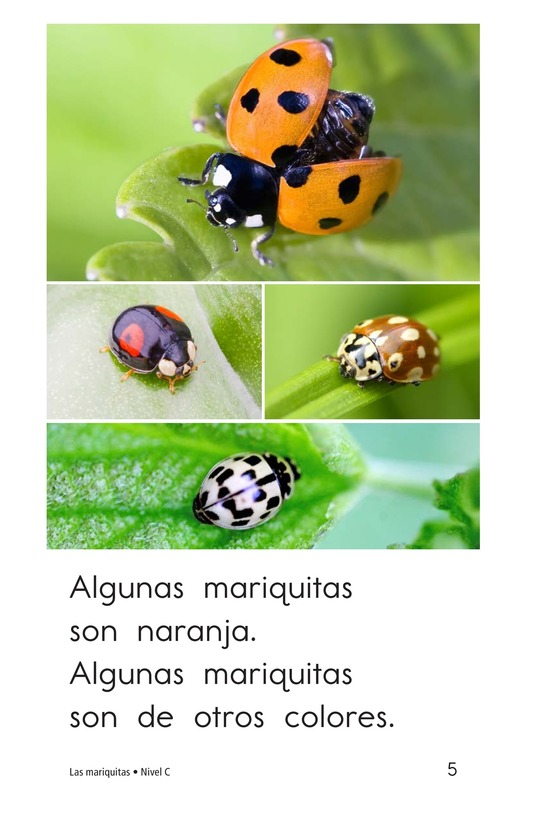 Book Preview For Ladybugs Page 5