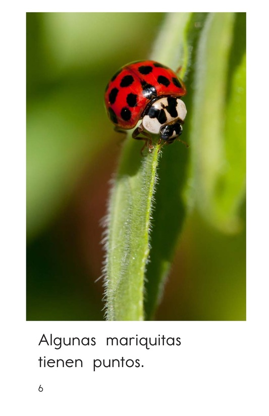 Book Preview For Ladybugs Page 6