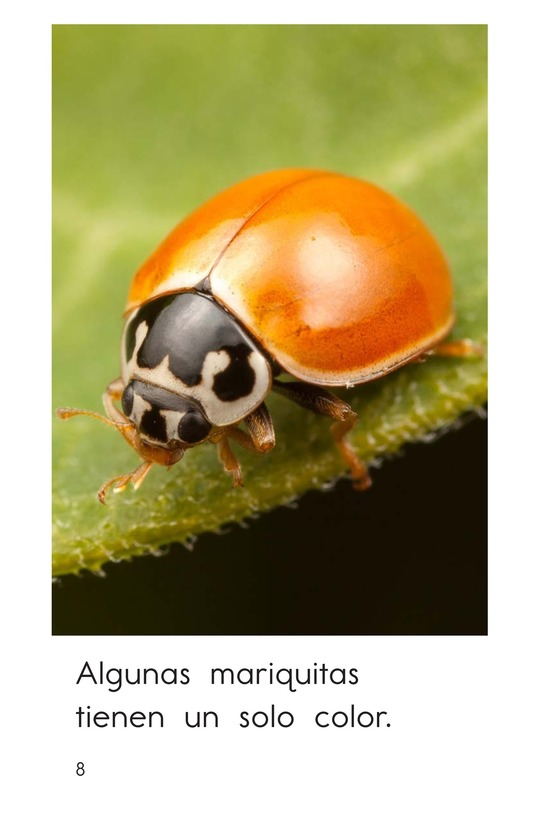 Book Preview For Ladybugs Page 8