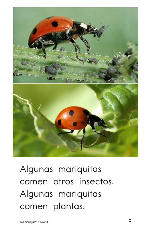 Book Preview For Ladybugs Page 9