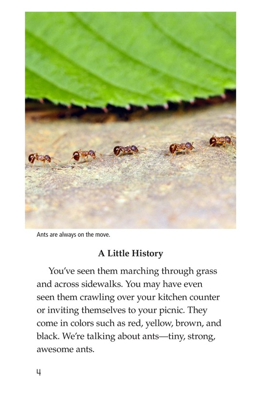 Book Preview For Awesome Ants Page 4