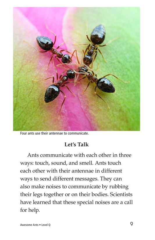 Book Preview For Awesome Ants Page 9