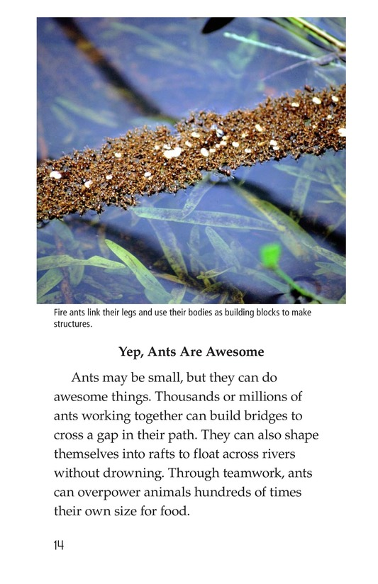 Book Preview For Awesome Ants Page 14