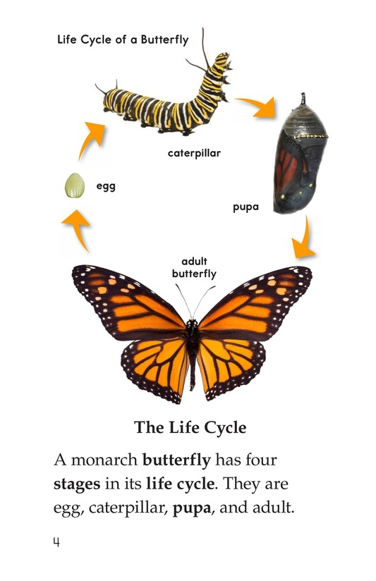 Book Preview For The Butterfly Life Cycle Page 4