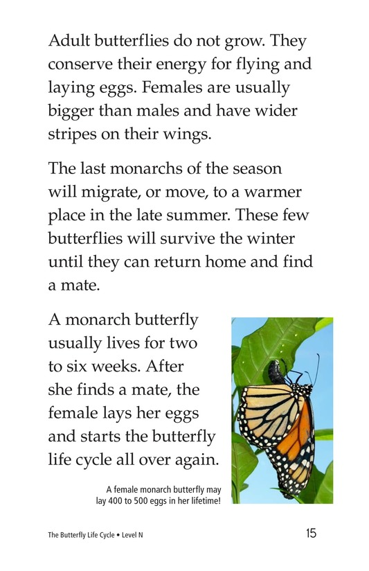 Book Preview For The Butterfly Life Cycle Page 15