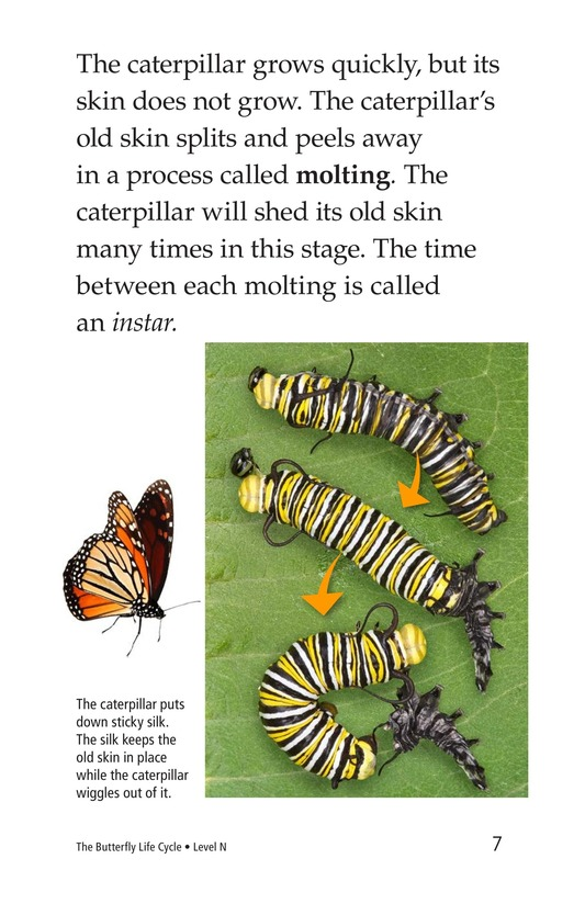 Book Preview For The Butterfly Life Cycle Page 7