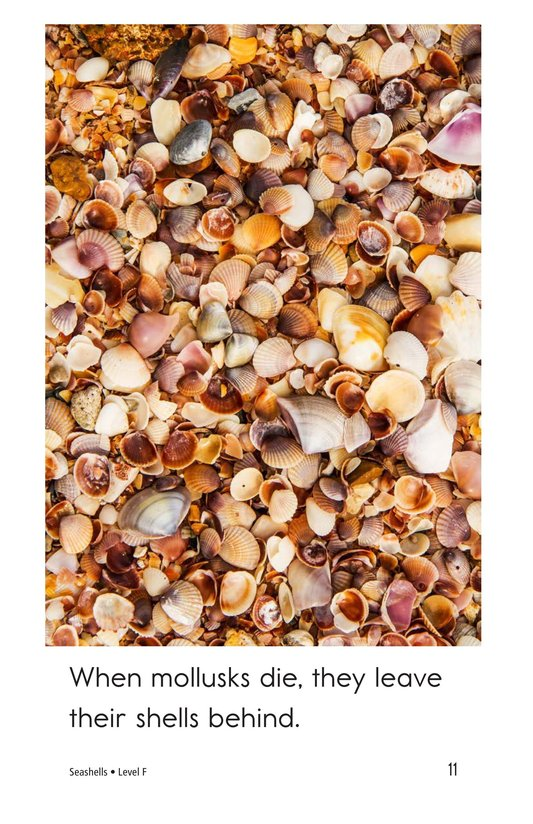 Book Preview For Seashells Page 11