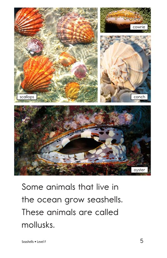 Book Preview For Seashells Page 5