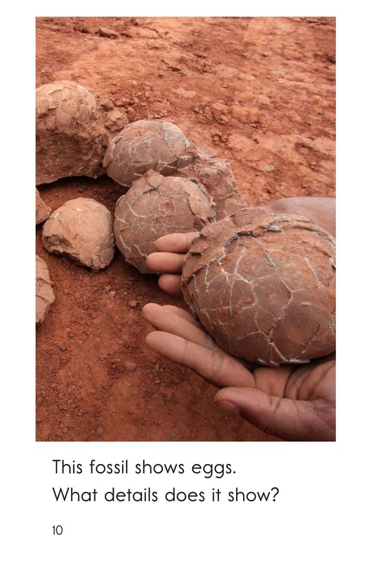 Book Preview For A Look at Fossils Page 10
