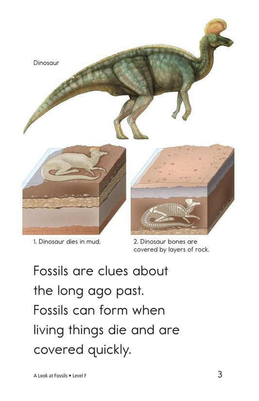Book Preview For A Look at Fossils Page 3