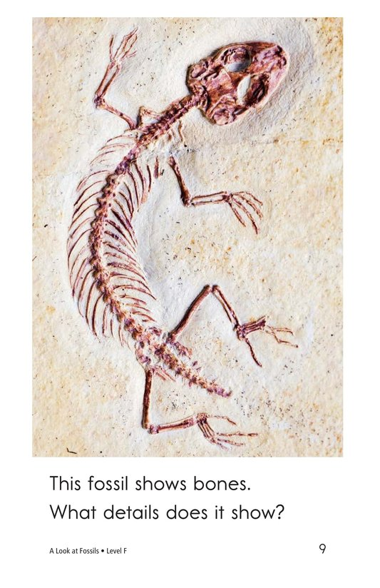 Book Preview For A Look at Fossils Page 9