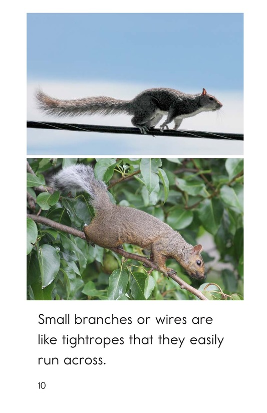 Book Preview For Squirrel Acrobats Page 10