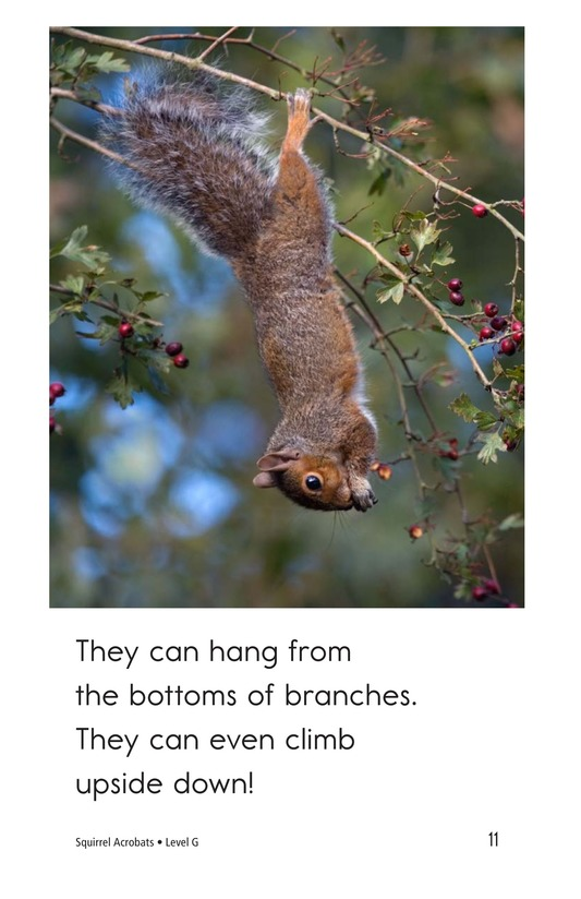 Book Preview For Squirrel Acrobats Page 11