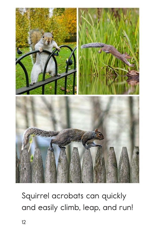 Book Preview For Squirrel Acrobats Page 12