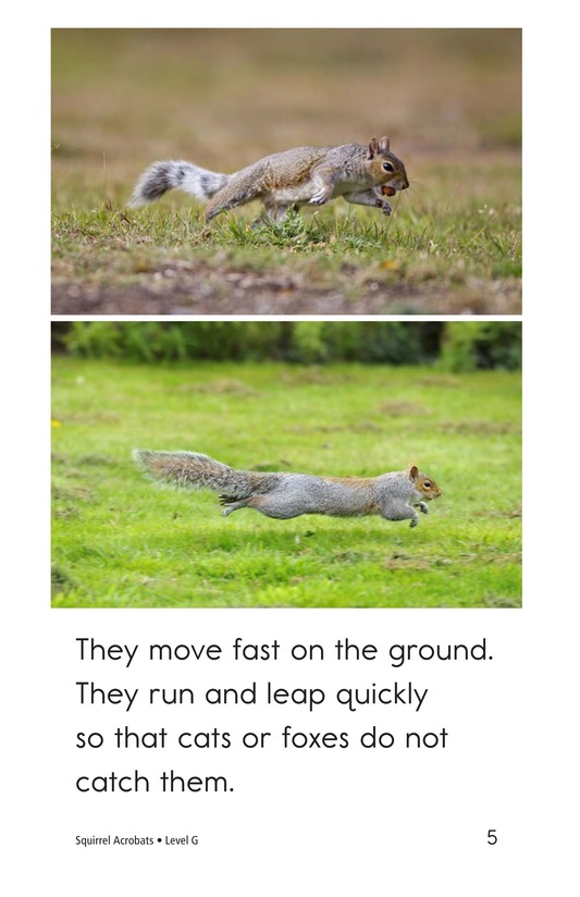 Book Preview For Squirrel Acrobats Page 5