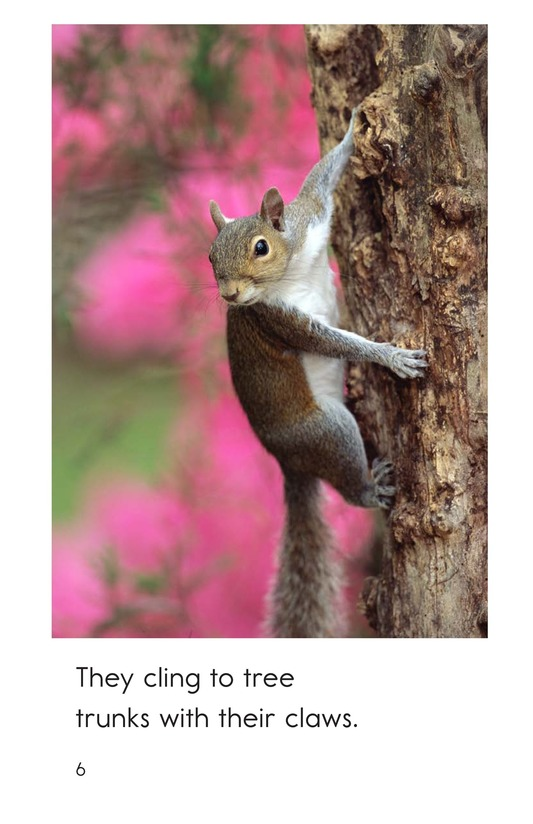 Book Preview For Squirrel Acrobats Page 6