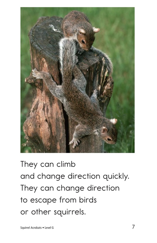 Book Preview For Squirrel Acrobats Page 7