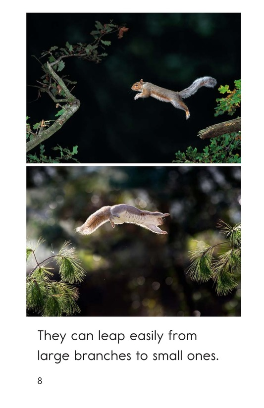 Book Preview For Squirrel Acrobats Page 8