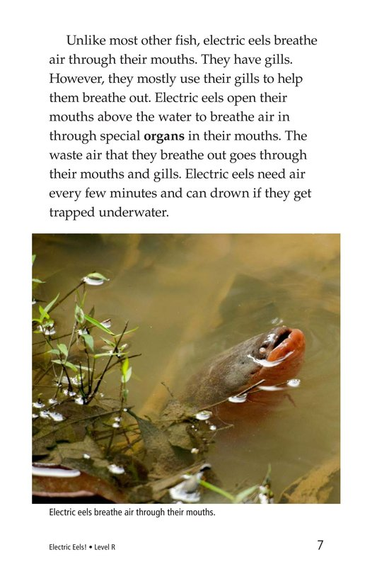 Book Preview For Electric Eels! Page 7