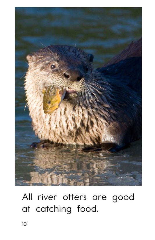 Book Preview For River Otters Page 10