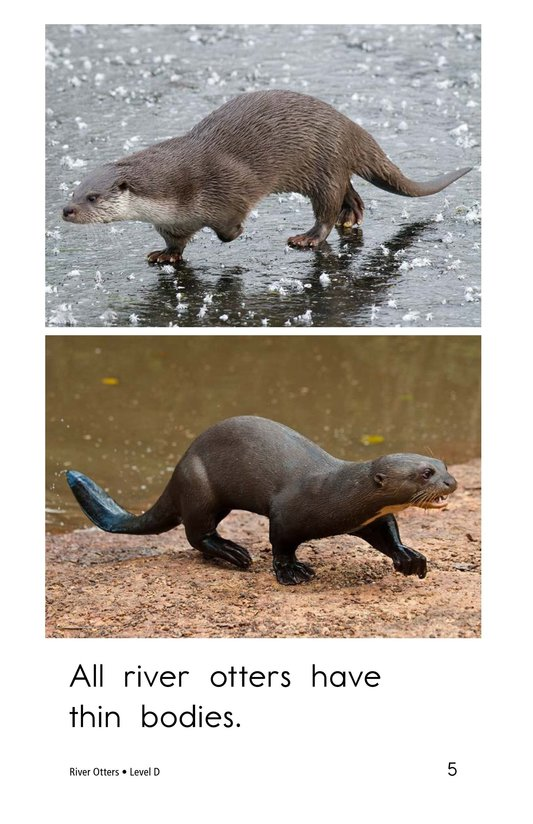 Book Preview For River Otters Page 5