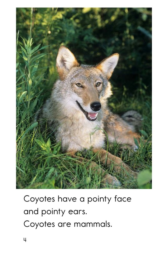 Book Preview For All About Coyotes Page 4