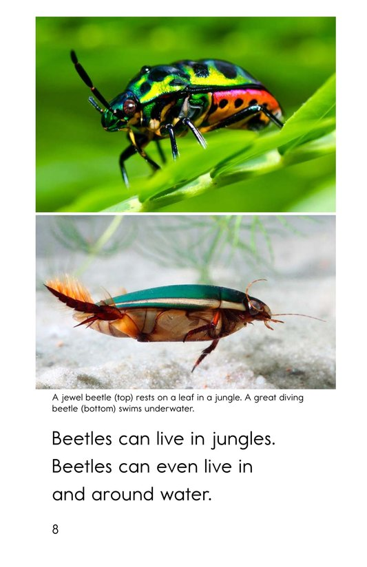 Book Preview For Meet the Beetles Page 8