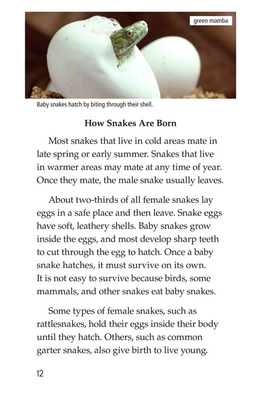 Book Preview For Slithery Snakes Page 12