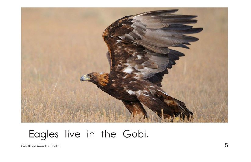 Book Preview For Gobi Desert Animals Page 5