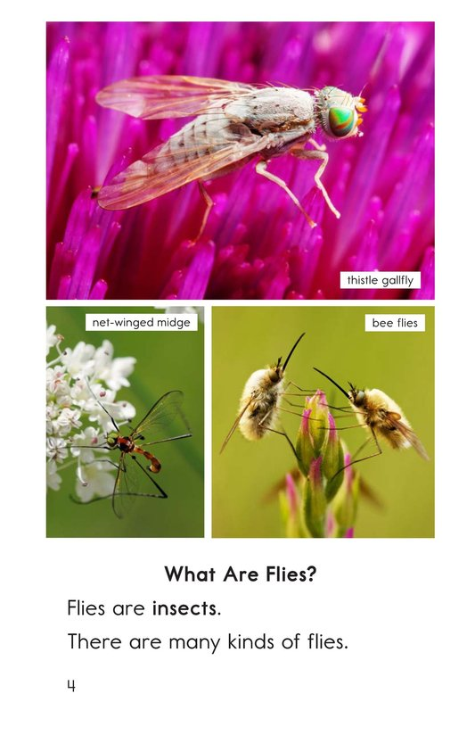 Book Preview For Flies Page 4
