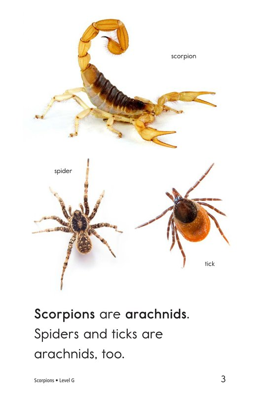 Book Preview For Scorpions Page 3