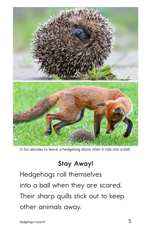 Book Preview For Hedgehogs Page 5