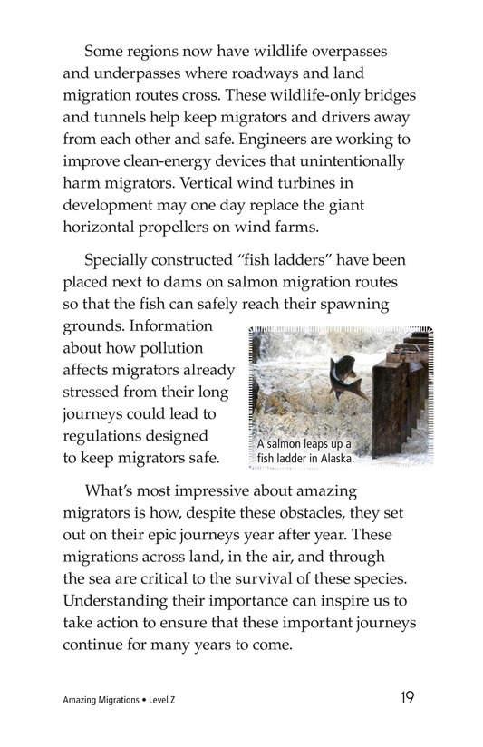 Book Preview For Amazing Migrations Page 19