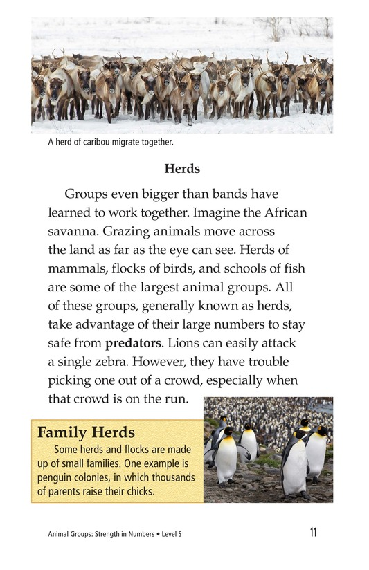 Book Preview For Animal Groups: Strength in Numbers Page 11