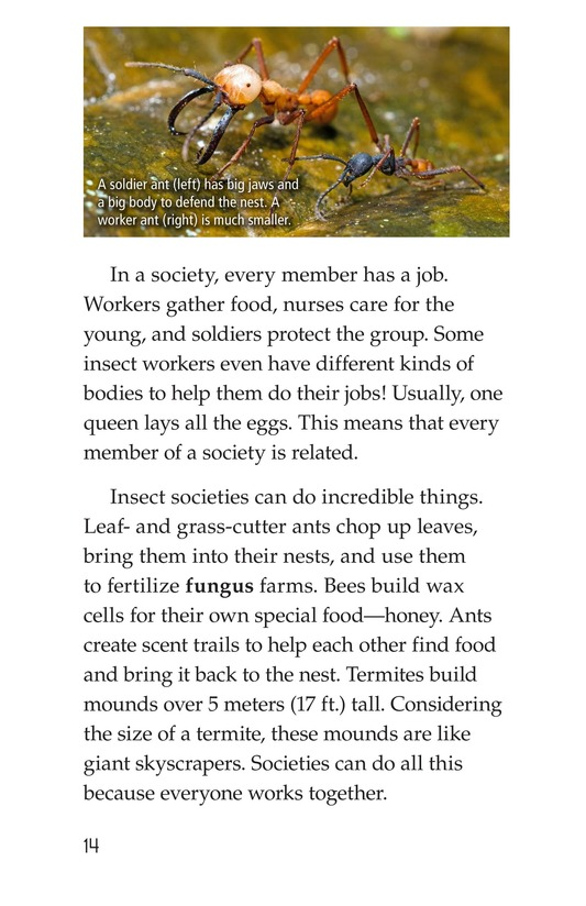 Book Preview For Animal Groups: Strength in Numbers Page 14