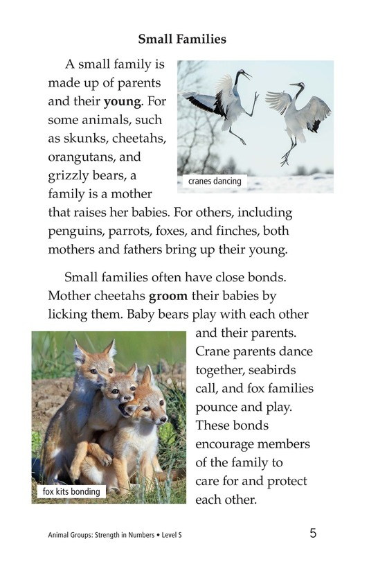 Book Preview For Animal Groups: Strength in Numbers Page 5