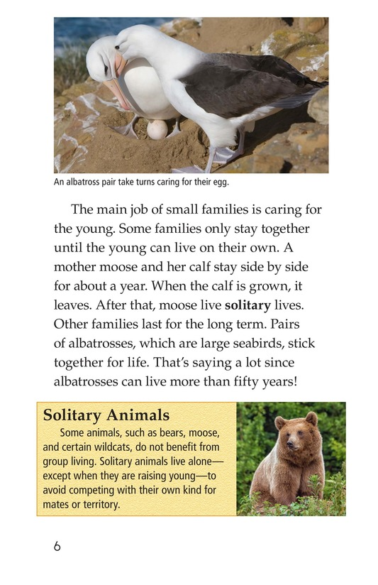 Book Preview For Animal Groups: Strength in Numbers Page 6